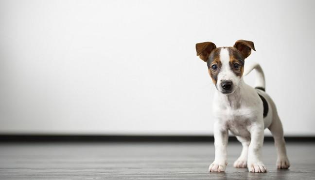 Wie sinnvoll ist eine Hundehaftpflichtversicherung?
