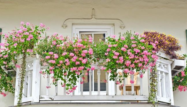 Blumenkästen richtig bepflanzen