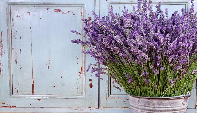 Lavendel – die neue Trendfarbe für die Wand