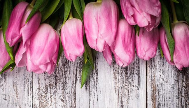 So werden Tulpen richtig gepflegt