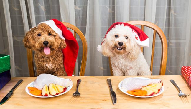 Vergiftungen – eine große Gefahr für Haustiere zu Weihnachten