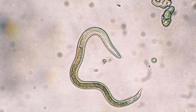 Spulwürmer bei Kindern – was Eltern beachten sollten