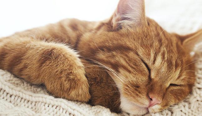 Wo bleibt die Katze, wenn es in die Ferien geht?