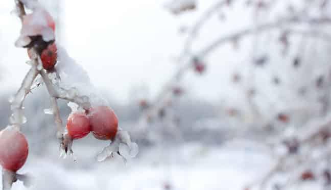 Tipps und Tricks für die Gartenpflege im Winter