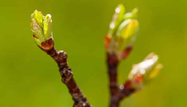 Der Garten im Frühling – welche Arbeiten stehen jetzt an?