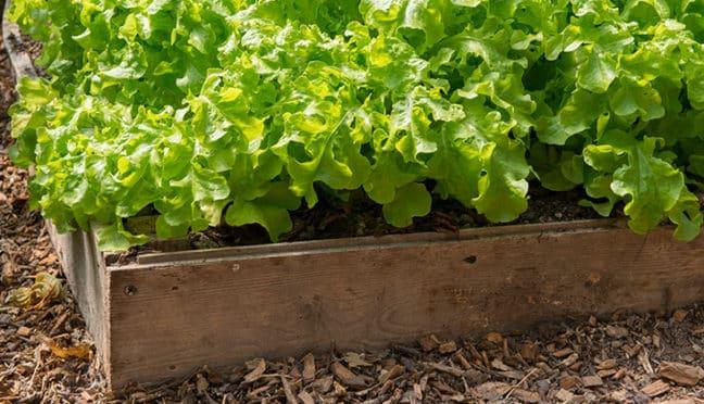 Hochbeete – ein neuer Trend für Gartenfreunde