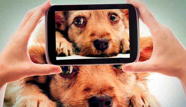 So setzen Hobbyfotografen ihre Haustiere perfekt in Szene
