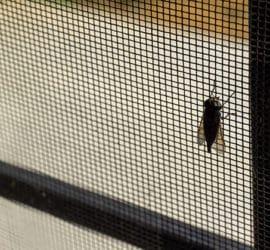 So einfach lassen sich Fliegen vom Haus fernhalten